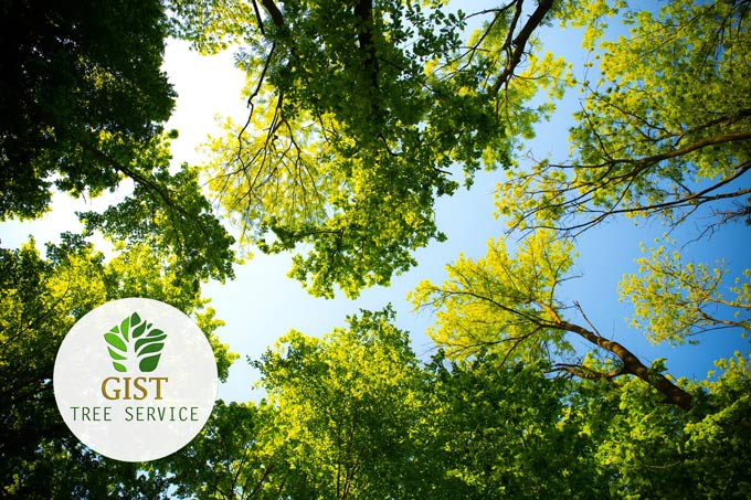What You Should Know About Trees on Your Property
