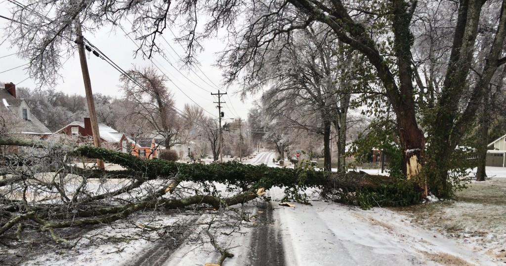 Winter Tree Service Tips